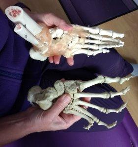 Real bones and plastic bones of the feet