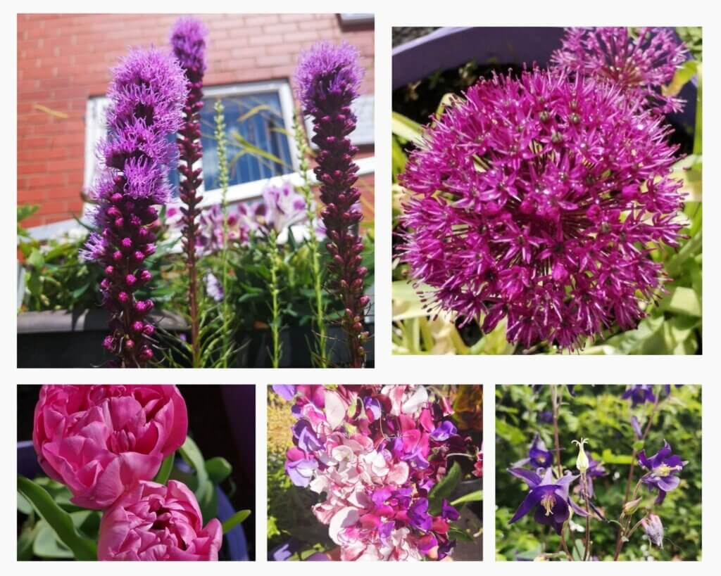Potty Purple Pod garden five different purple flowers
